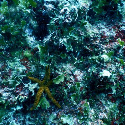 Sv.Kristofor - nurkowanie w Chorwacji