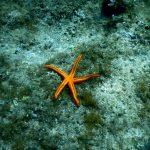 Sv.Kristofor - podwodny świat Chorwacja