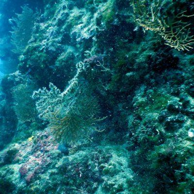 Chorwacja nurkowanie - Sv.Kristofor
